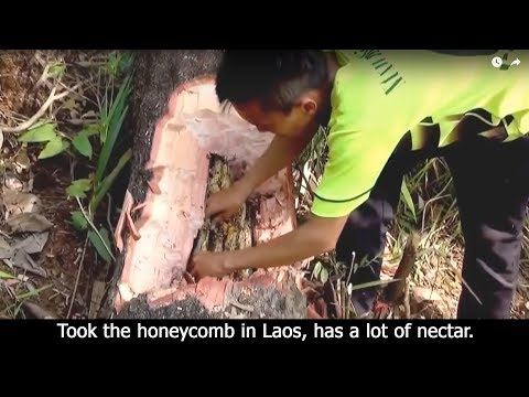 Took the honeycomb in Laos, has a lot of nectar.