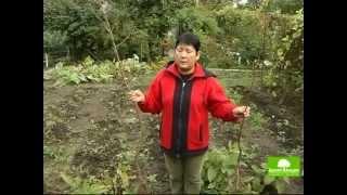 Урок 7 - Фруктовые деревья в саду - Ландшафтный дизайн