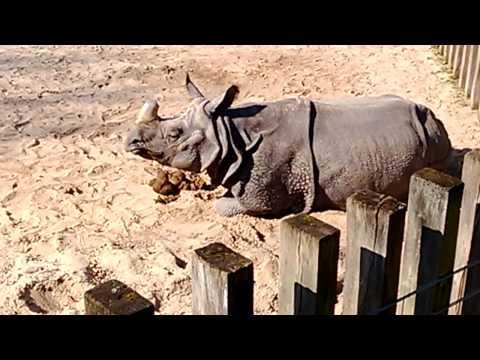 zoo di stuttgart