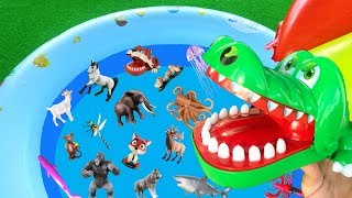 Animals for Kindergarten - Learn Wild and Sea Animal Names | Toys for Kids | Lum Sum Kids