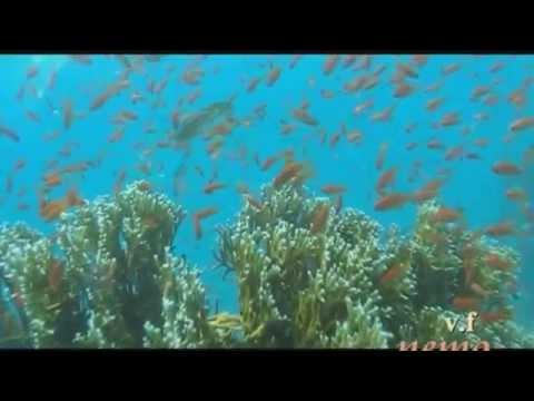 Dive in Red Sea, Egypt, Marsa Alam, 10.2012.