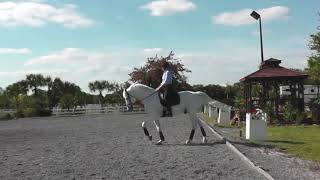Is Your Dressage Horse Ready for Flying Changes