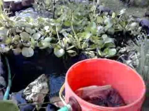 Filtro casero de cubeta para tortugas o peces doovi for Filtros para estanques de peces caseros
