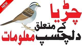 Facts About Sparrows | Sparrow Bird  | Birds Information | Sparrow Birds Facts |  Hidden Secrets