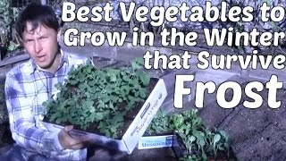 Download Mp3 Best Vegetables To Grow In The Winter That Survive Frost