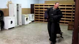 Dog Training Miami ,personal Protection Dogs For Sale,knpv Dutch Shepherd