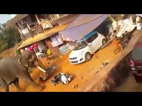 Elephant attack in Valanchery Kerala Latest News - YouTube