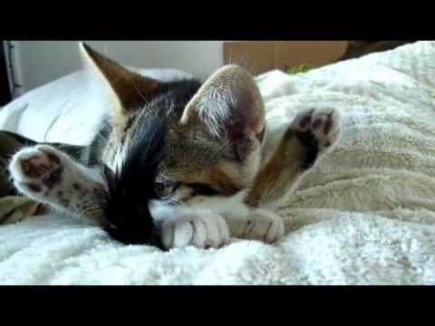 diese katze macht yoga youtube. Black Bedroom Furniture Sets. Home Design Ideas