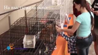 """Выставка раздача животных из приюта """"Пойдём домой"""""""