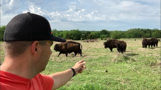 Should We Sell the Goats and Get Bison?