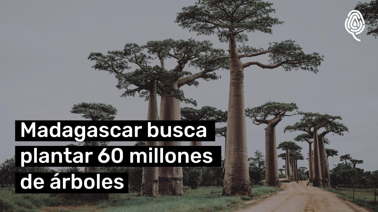 Reforestación en Madagascar | El país quiere plantar 60 millones de árboles