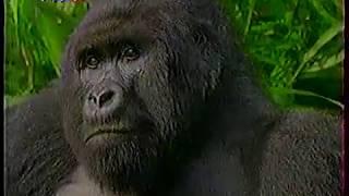 Диалоги о Животных (15.01.1999) Семейство горных  горилл