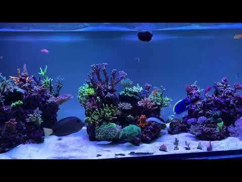 Red Sea Reefer 650 Peninsula