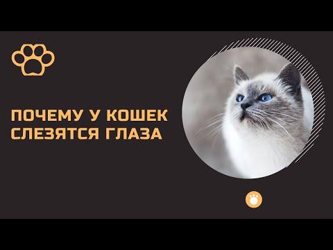 У кота слезятся глаза. Почему у кошек слезятся глаза? Чем лечить?