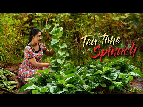 Spinach for Tea time! Do you prefer it Savory or Sweet? | Traditional Me