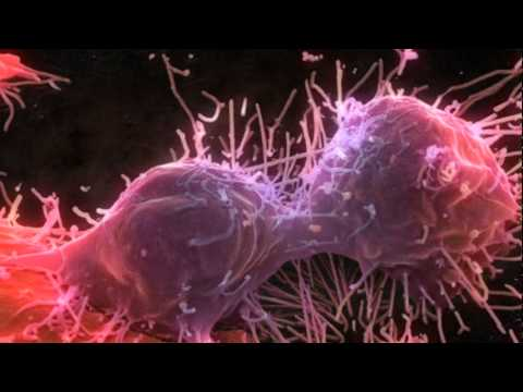 What is Blood Cancer