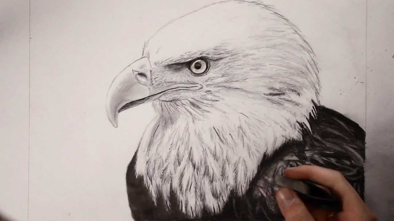 bald eagle speed drawing youtube