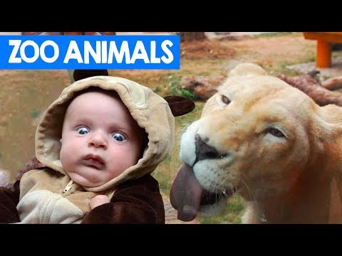Funniest Zoo Animals Bloopers of 2018 Compilation | Cute Critters TV