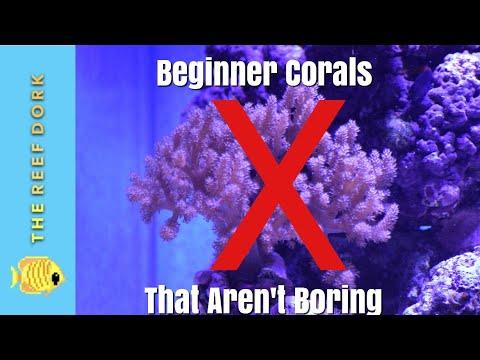 Top 7 Beginner Corals (That Aren't Boring)