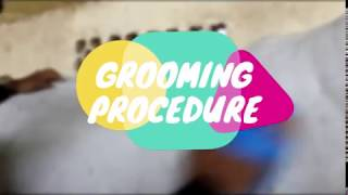 [UTM Equine Management] SMBQ 1033 Farm & Stable Management - Grooming