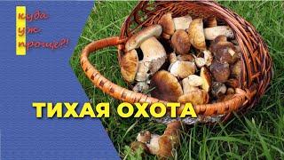 Тихая охота собираем грибы после засушливого лета в поисках грибов