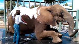 Videos trip to Wild Things Ranch in Salina CA