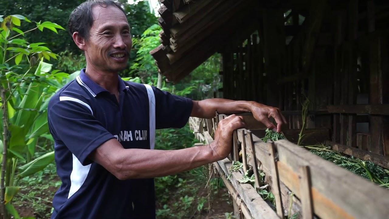 Cerita Peternak Kampung Gajah