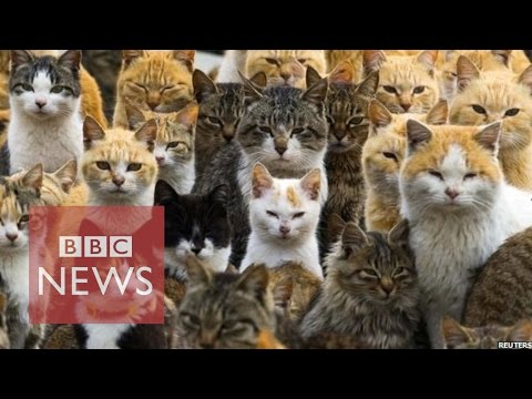 Thumbnail for Cat Video Japan's Cat Island - BBC News