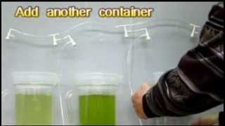 Cultivate microalgae (can feed fish fry or artemia )
