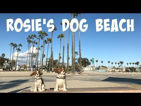 Rosie's Dog Beach   Long Beach California Los Angeles County