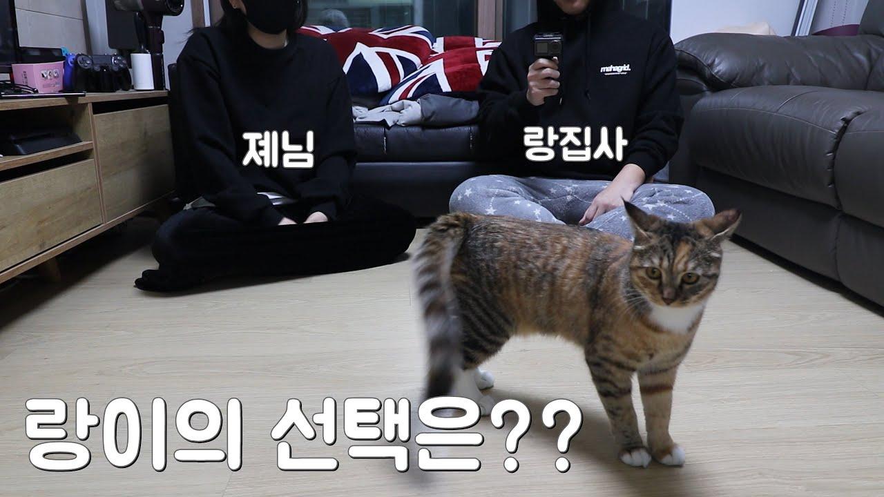 [너랑,나] 고양이 랑이의 선택 !! 누가 더 좋은지 선택해 !! 졔야 나야 What is the cat's choice?