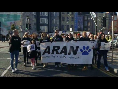 Ireland's Fur Trade (2017) - FULL DOCUMENTARY