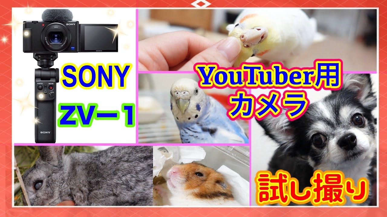 ヒカキンさんも購入したYouTuber用カメラ「SONY ZV-1」でペットたちを試し撮りテスト(インコ・チワワ・ハムスター・うさぎ)