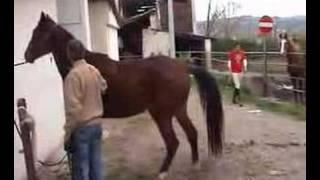 Repeat youtube video Cavalli in natura - Monta Naturale - Mating natural