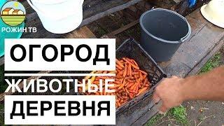 ЭКСКУРСИЯ ПО ХОЗЯЙСТВУ