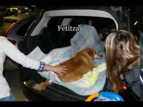 16 novembre 2013 Cali Fetitza Paco Rozica et Spot