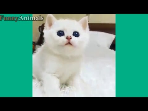 Cute Kittens And Funny Kitten Videos Compilation 2017