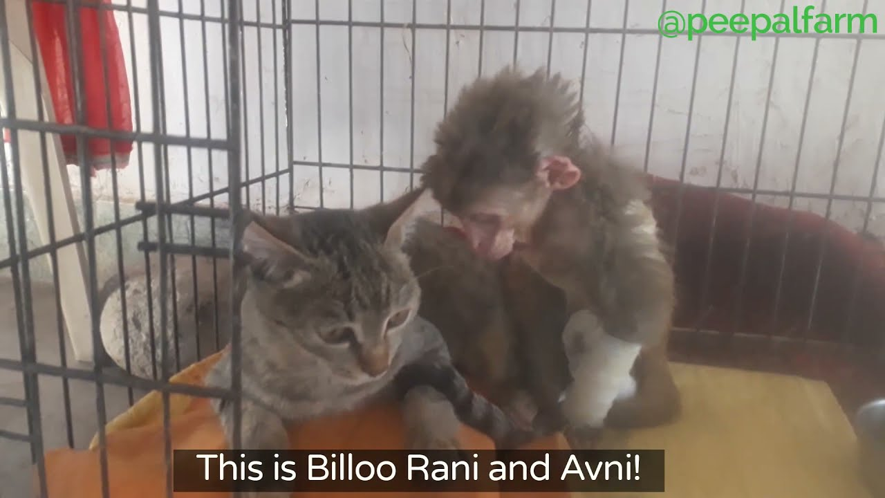 This Monkey and this Cat are BFFs! - YouTube