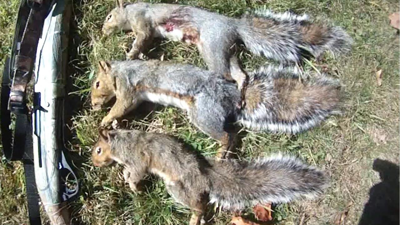 Small Game Hunting #11: 3 Gray Squirrels by 20 Ga. Shotgun ...