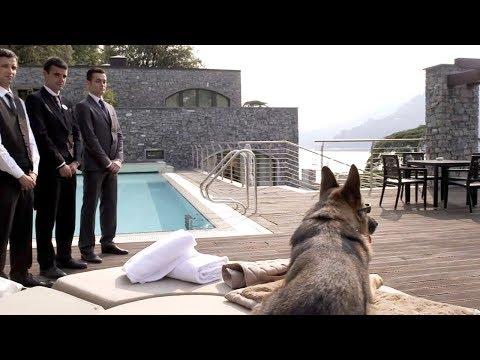 У Этой Собаки 100 Миллионов Долларов. Самая Богатая Собака в Мире!