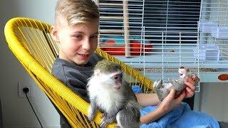 ВОРИШКА и вреДина...Не удачно пробуем покупать обезьянку.