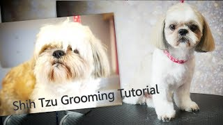 PetGroooming  Shih Tzu Grooming from start to finish #91