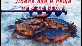 Ловля леща и язя зимой на реке Волге. Рыбалка на леща и язя зимой на течении, видео.