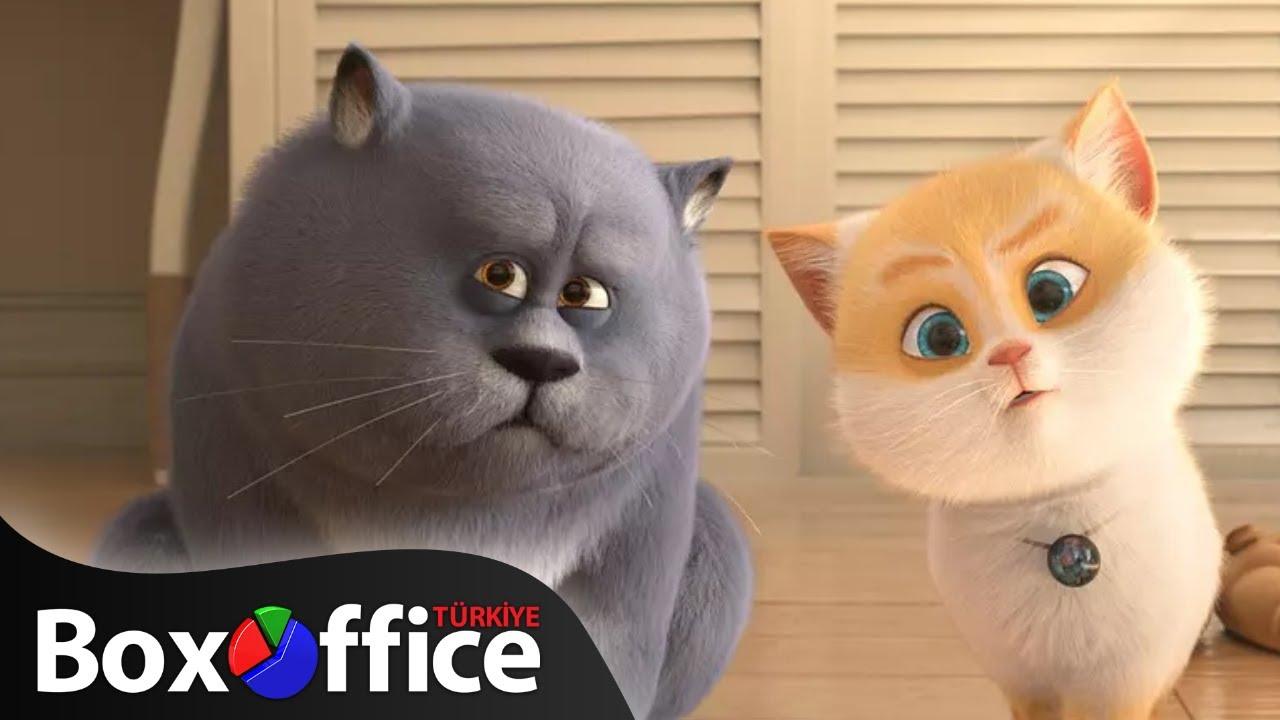 Kediler: Fragman (Türkçe Dublajlı)