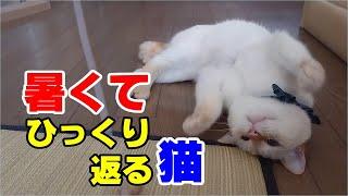 熱中症になりそうになっても飼い主の側から離れない猫