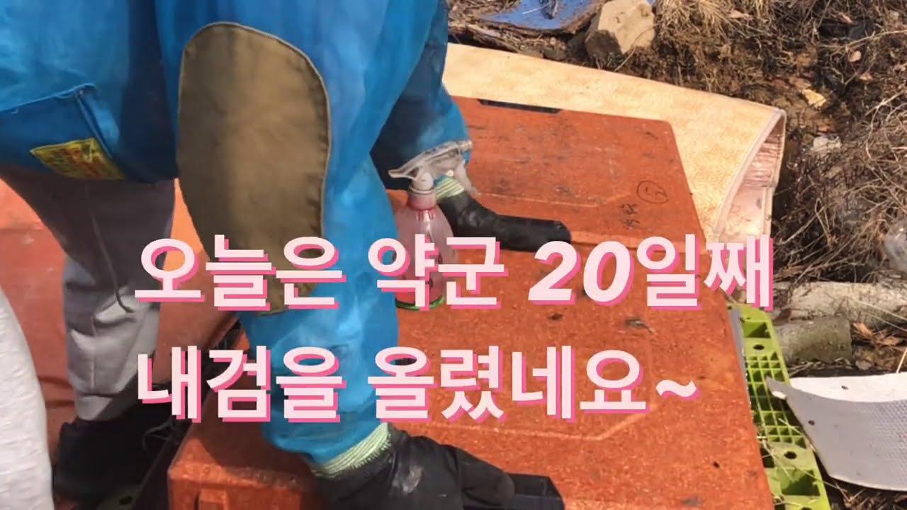 (21.2.15)봄벌깨우고 3주차 내검(약군)