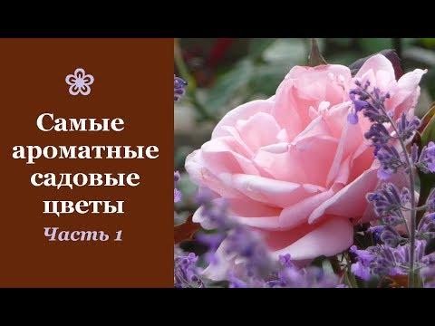 ❀ Самые ароматные садовые цветы. Часть 1