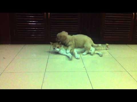 vụ án con chó nhỏ hiếp dâm con mèo (LAMBORGHINI -Thập Diện Mai Phục- #6)