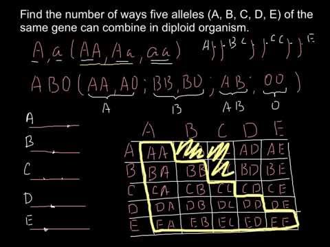 How to find a number of unique combinations of five alleles in diploid organism