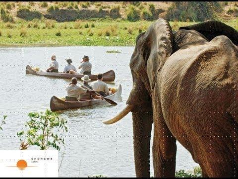 Webinar: Chongwe Safaris, Lower Zambezi National Park, Zambia